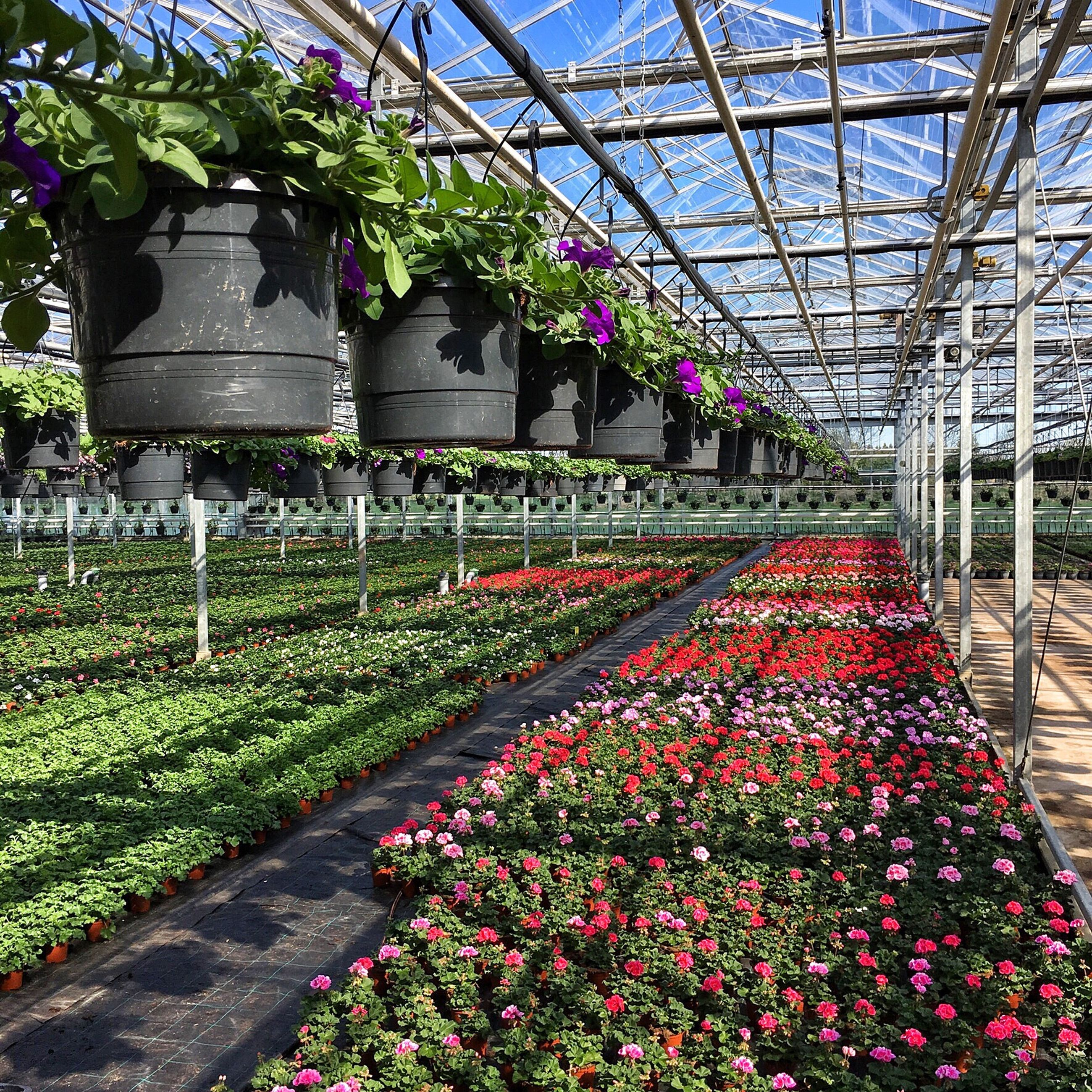 flower, plant, growth, nature, blossom, beauty in nature, greenhouse, no people, day, fragility, freshness, outdoors, botanical garden