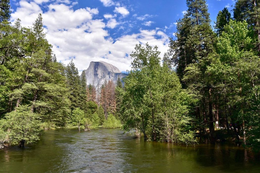 Tree Water Day Outdoors Nature Beauty In Nature Scenics Sky No People Green Color Forest Growth Mountain Architecture Yosemite National Park Half Dome