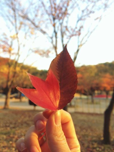 울산대공원 낙엽 단풍 가을 Fallen Leaves Autumn Fall Ulsan Grand Park