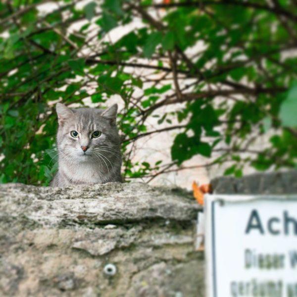 Achtungкот Cat Instacat Catoftheday Mytravel germany instamood котвзасидке
