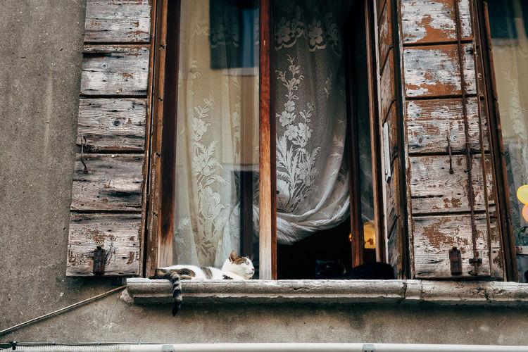 Close-up of dog on window