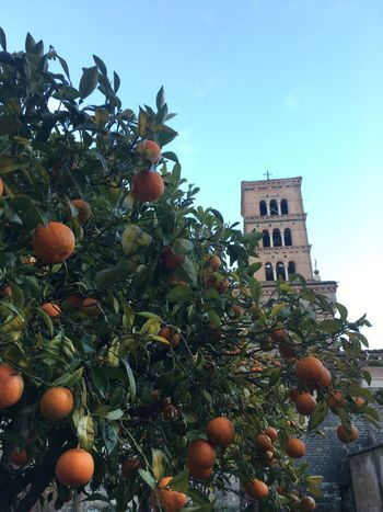 Low Angle View Tree Orange Tree Growth Architecture