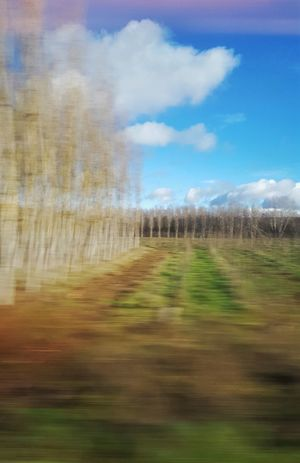 Desde el tren 2.- Sky And Clouds Clouds And Sky Capture The Moment Tree_collection  Tree Treescollection Tree And Sky Samsung Galaxy S6 Edge From My Point Of View Point Of View Enjoying The View Authentic Moments
