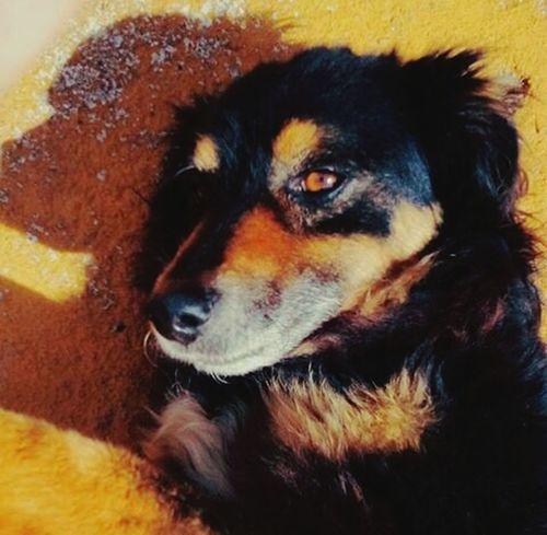 Selfie ✌ Selfies Selfiedog Selfiedoglove Selfiedog♡ Neguinho Lover Amo❤ Animal Photography Dog Love Love Cute Dog Pets pets Domestic Animals Close-up One Animal