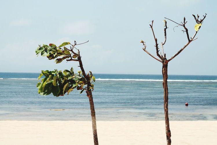 EyeEm Selects Tree Water Sea Beach Branch Sand Sky Horizon Over Water Landscape