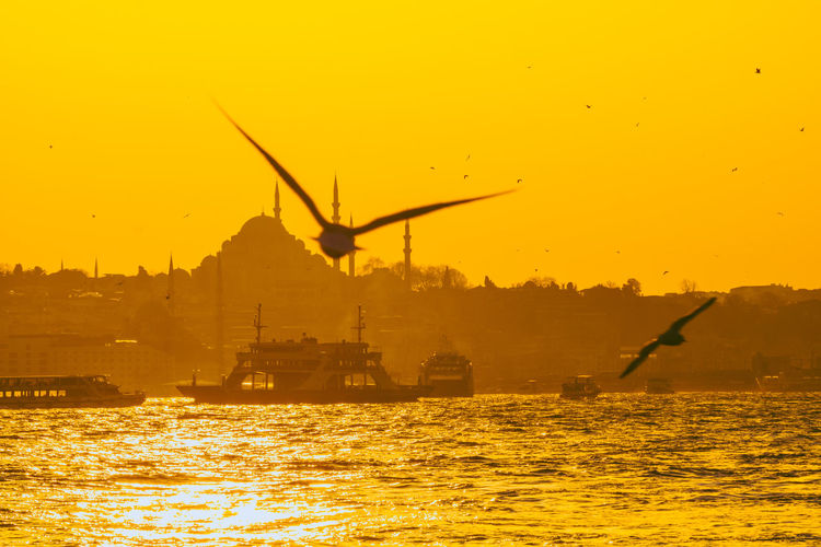 Silhouette cranes by sea against sky during sunset