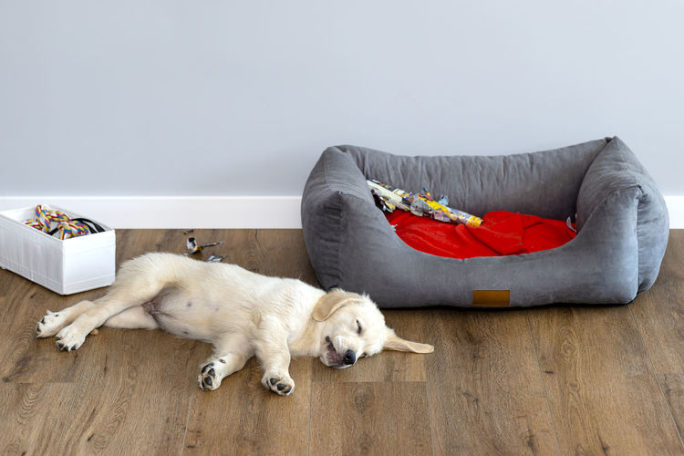 View of a dog lying down on sofa