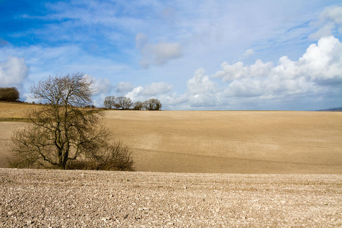 Sussex Farmland Agriculture Bare Tree Beauty In Nature Cloud - Sky Countryside Day Environment Landscape Nature No People Outdoors Planting Ploughed Plowed Scenics Sky Soil South Downs Spring Sussex Tree