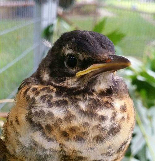 Baby Bird Young