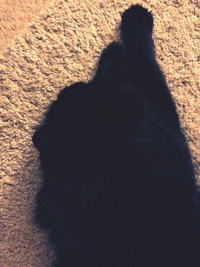 Wishing it was Winter Ferral Cats Animal Animal Friends Snug Cosy Carpet Black Black Cat Neko Cat Shadow High Angle View Nature Sunlight Focus On Shadow Lifestyles Day Leisure Activity