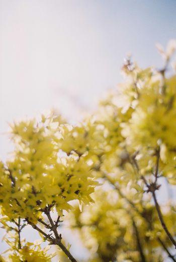 Film Yellow