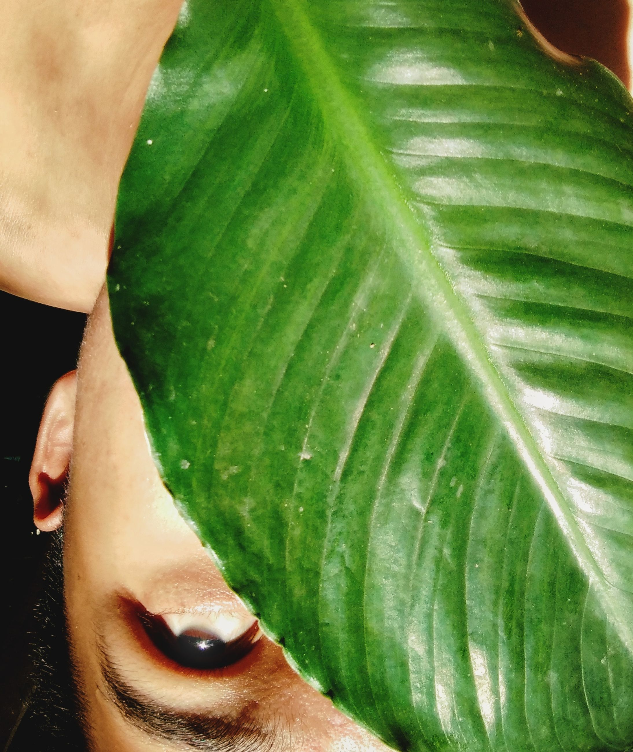green color, human body part, close-up, one person, hand, leaf, food and drink, vegetable, human hand, body part, freshness, real people, food, plant part, nature, lifestyles, women, outdoors, day, finger, human face