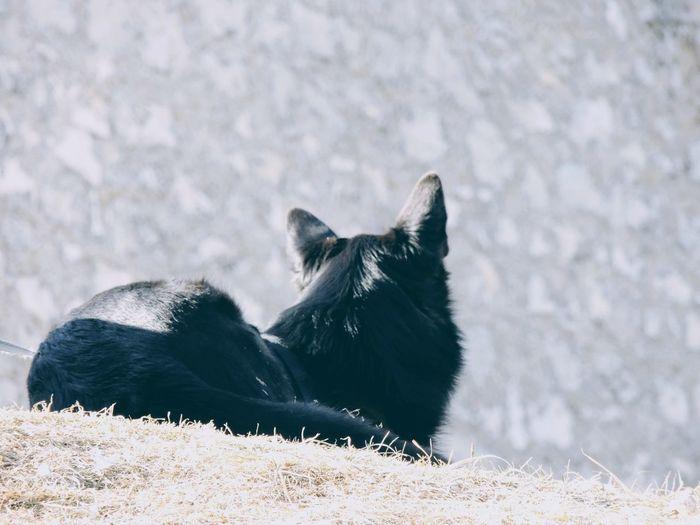 Black dog lying on a land