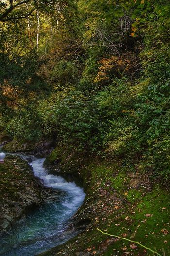 Nature Waterfall Beauty In Nature Scenics Water Forest No People Tree Stream - Flowing Water Green Color Autumn Landscape Grass Rapid Outdoors Freshness Day Lush - Description Drone