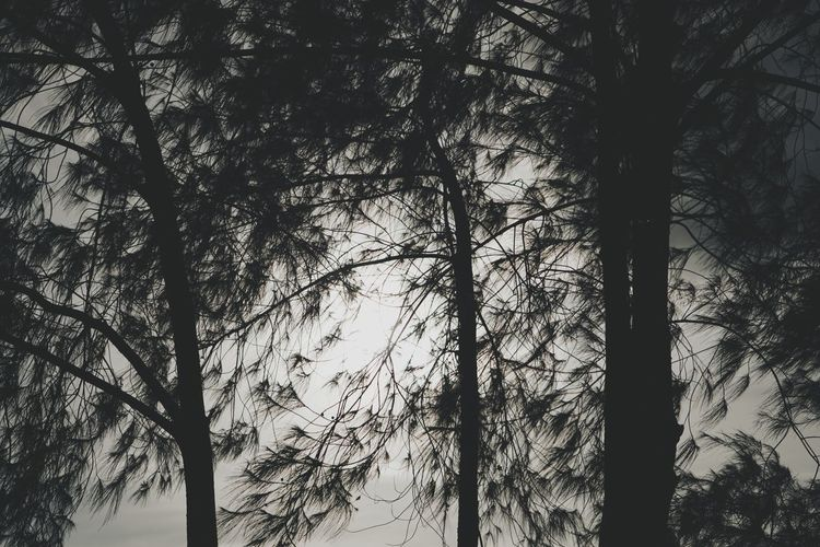 branches The Great Outdoors - 2018 EyeEm Awards Philippines Photos Bohol Photos Treepark Silence Of Nature Silhouette Light And Shadow Bohol Philippines Bohol Adventure Streamzoofamily Bohol Island Bohol Travel Outdoor Tree Branch Forest Tree Trunk Pine Tree Needle - Plant Part Coniferous Tree Pine Wood Birch Tree Pinaceae Tree Area WoodLand Pine Woodland Silhouette Treetop Plant Part