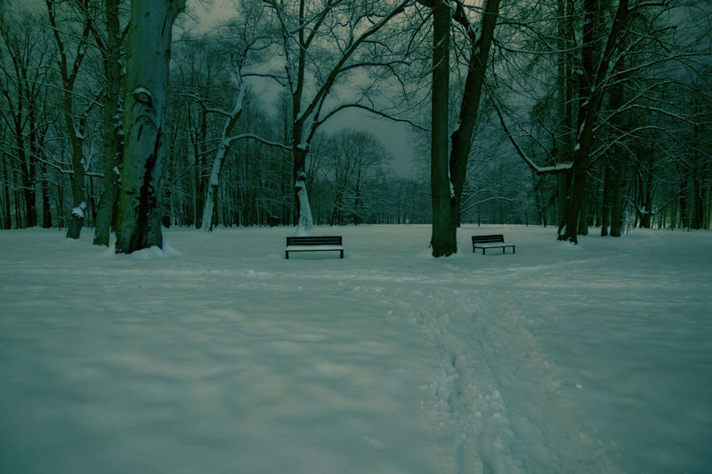 Night Scene Bare Tree Beauty In Nature Benches Cold Temperature Frozen Nature No People Outdoors Park In Snow Scenics Snow Tranquility Transportation Tree Two Paths Weather Winter