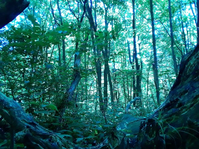 Tree Nature Forest Outdoors Beauty In Nature Mohican Tranquility Leisure Activity Ohio No People Tree Nature Relaxation