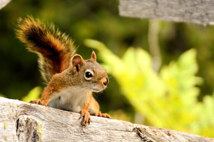My new hiking friend 😊 Tree Squirrel Tree Stump Cute Rodent Close-up Animal Themes Woods Chipmunk Hokkaido Animal Eye Tree Trunk Animal Ear Peanut - Food Branch Fallen Tree Growing Plant Bark Palm Frond Bark Nut - Food