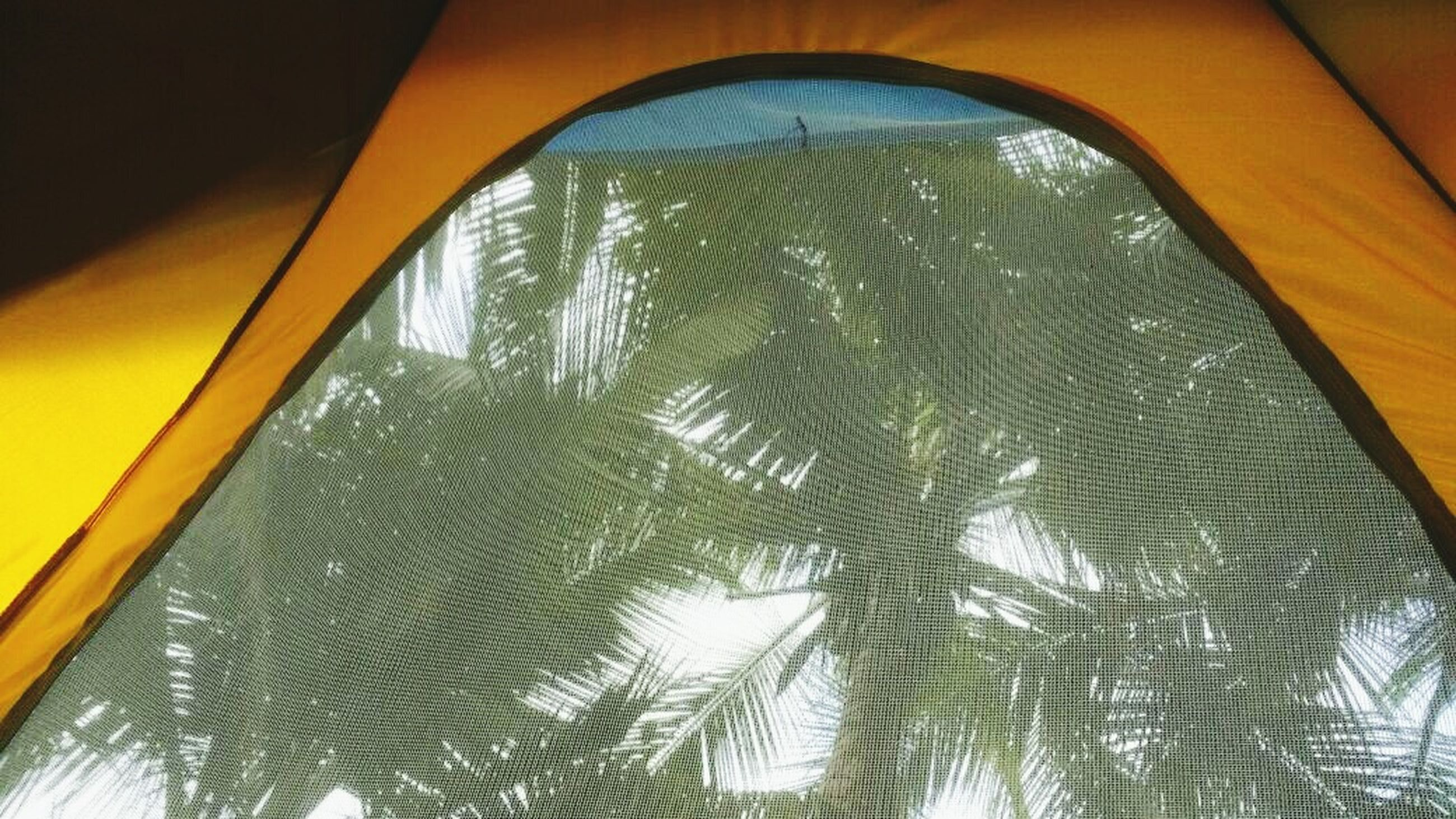 indoors, no people, low angle view, close-up, tree, day