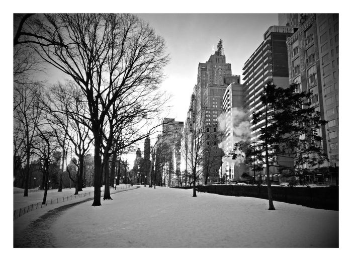 Central Park Sunrise