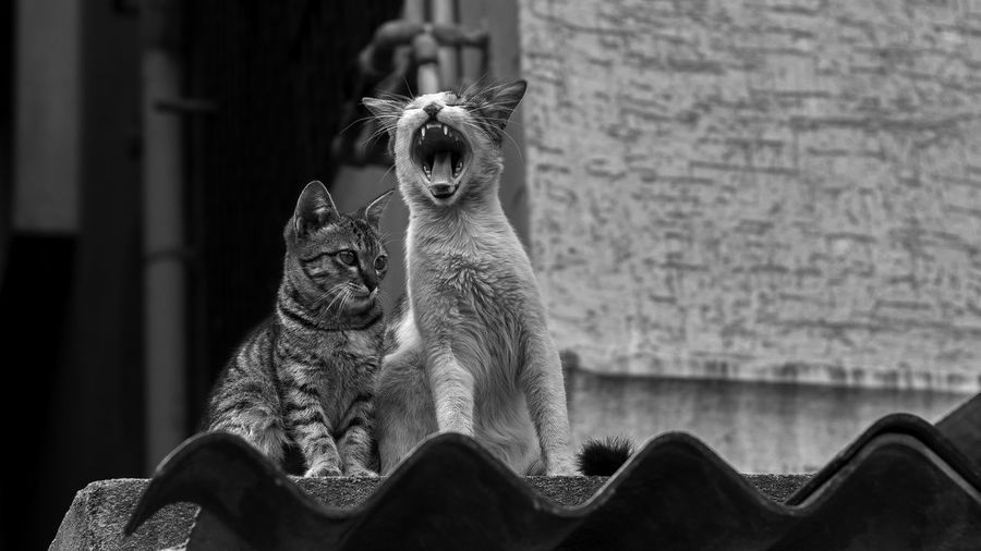 No People One Animal Animal Themes Close-up EyeEm First Eyeem Photo EyeEmBestPics Eye Em Nature Lover Travel Photography Outdoors EyeEm Best Shots EyeEm Gallery Canon Karnataka Bangalore Cat Blackandwhite Streetphotography Nature