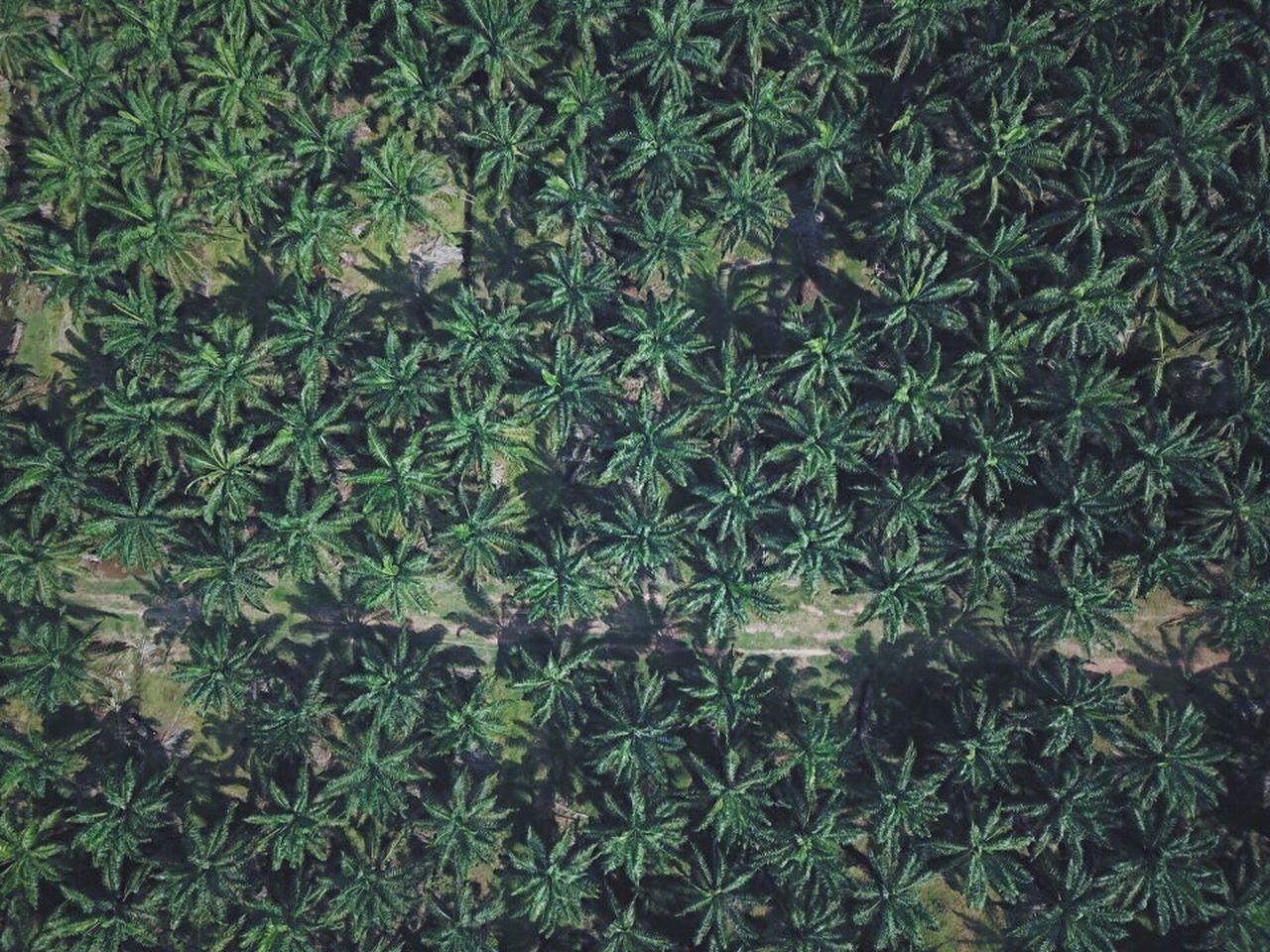 FULL FRAME SHOT OF PLANT