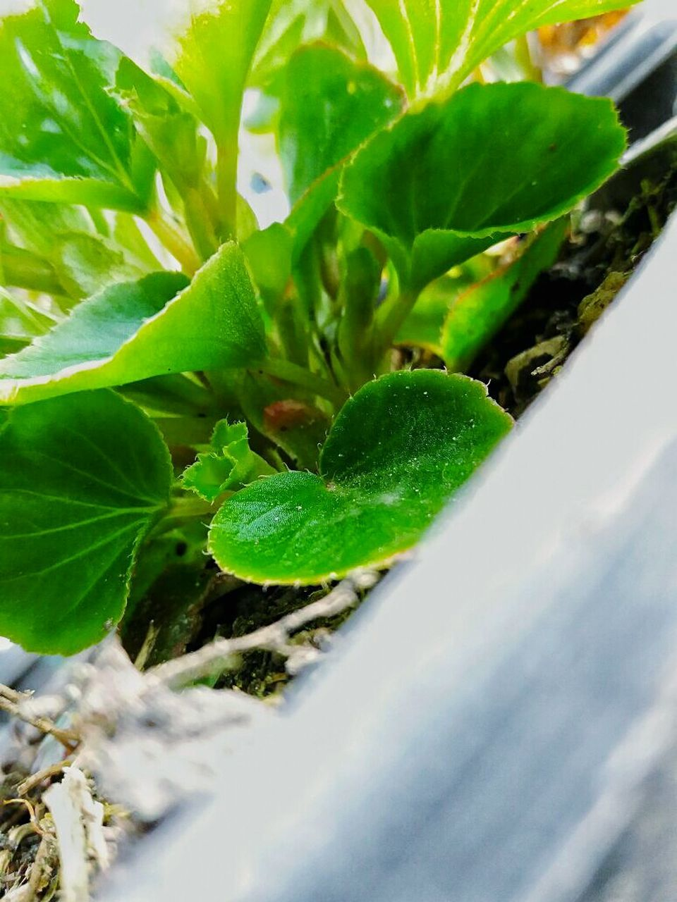 leaf, green color, growth, plant, nature, no people, close-up, day, outdoors, beauty in nature, freshness, fragility