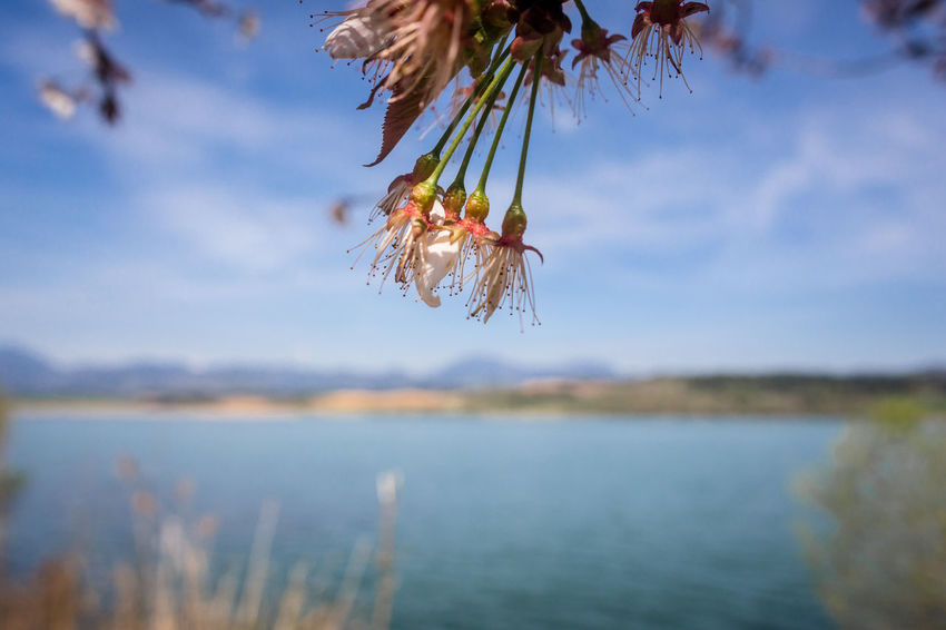 Spring forever! Beauty In Nature Close-up Day Focus On Foreground Food Food And Drink Growth Hanging Lake Nature No People Outdoors Plant Scenics - Nature Sky Tranquil Scene Tranquility Tree Water
