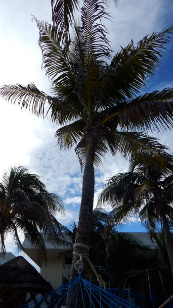 Andrevieira Ferias2015 Fotografering Férias Grandparkroyal Nature No People Outdoors Palm Frond Palm Tree Photo Photografie Photographie  Photography Portrait Portrait Photography Vocation Cancun Eyeem Collection Welcome Wekly Beauty In Nature Photographie  Fotopaisagem