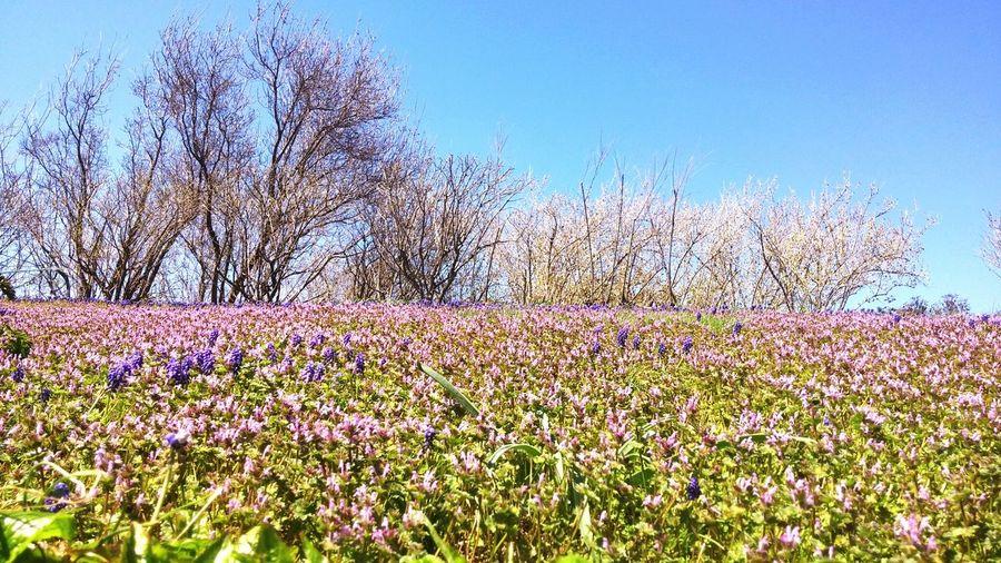 Beautiful Flower meadow Garden Relaxing Pretty