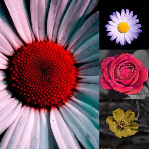 Flower Flower Head Beauty In Nature Wallart Flowerporn