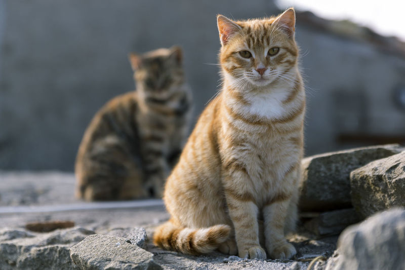 Two cute cats posing for a picture Animal Themes Couple Curious Cutie Day Daytime Feline Focus On Foreground Friendly Animals Mammal No People Outdoor Outdoors Pets Posing Posing For The Camera Rocks Sitting Standing Staring