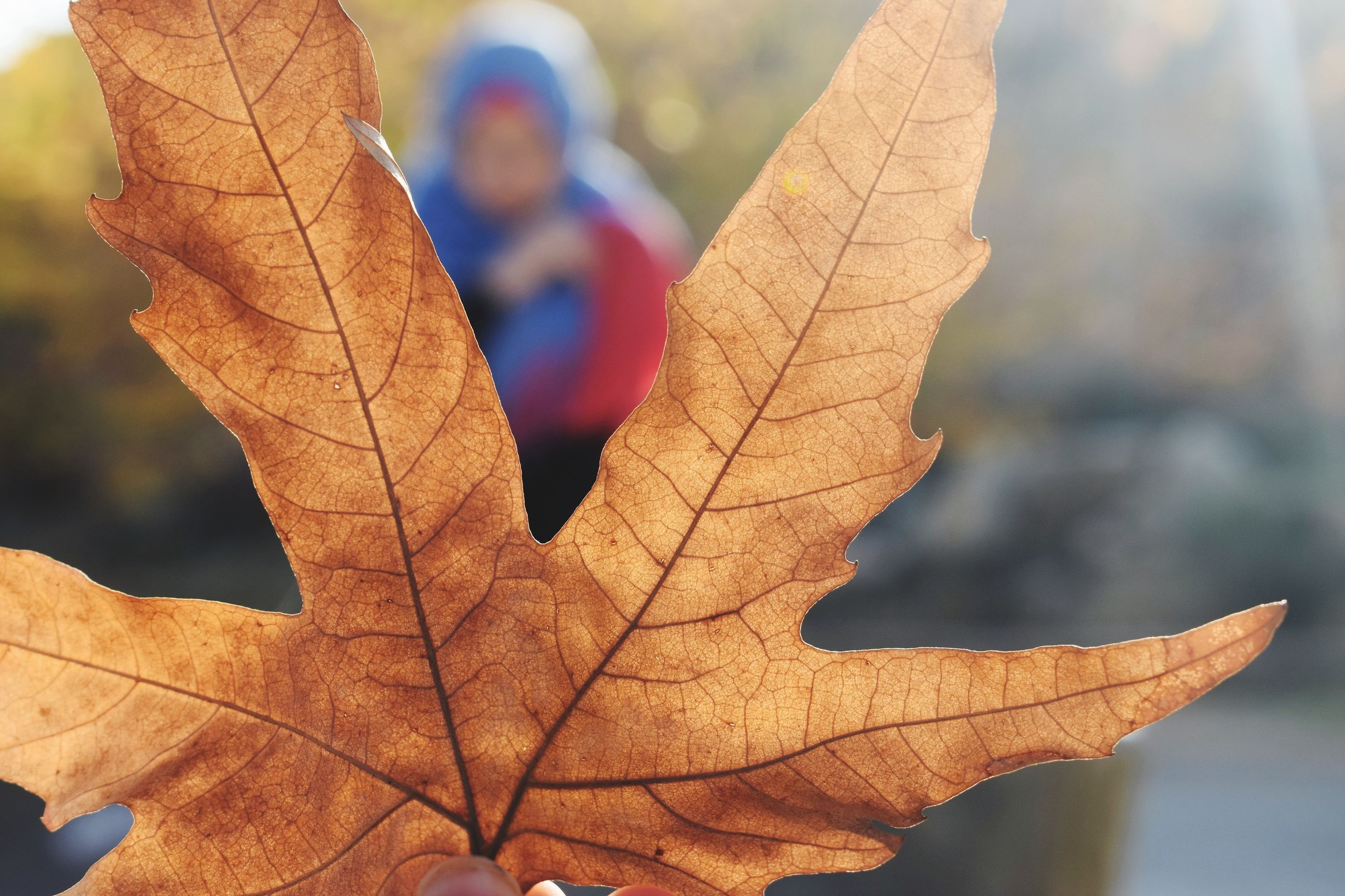 plant part, leaf, focus on foreground, close-up, leaf vein, change, autumn, dry, nature, day, vulnerability, fragility, no people, plant, orange color, outdoors, beauty in nature, leaves, selective focus, maple leaf, autumn collection, natural condition, dried