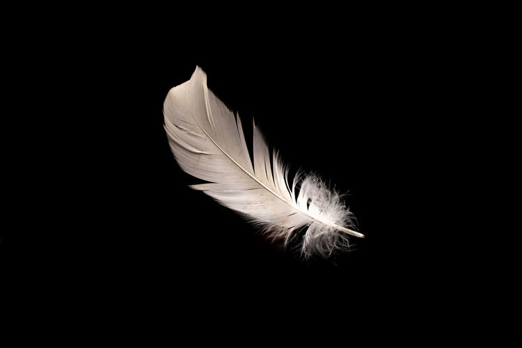 Close-up of feather over black background