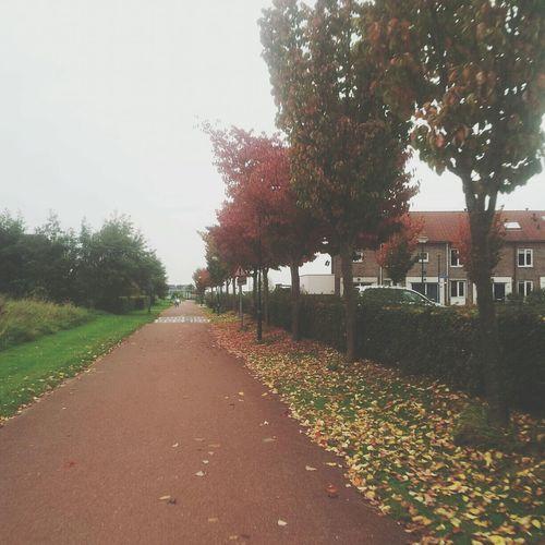 Herfst Autumn Colors Autumn Fietspad