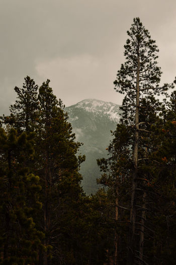 Beauty In Nature Camp Timberline Day Estes Park, CO Estespark Fog Forest Landscape Longs Peak Mountain Nature No People Outdoors Scenics The Great Outdoors - 2017 EyeEm Awards Timber Tranquil Scene Tranquility Tree Tree Line