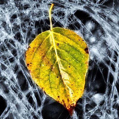 Leaf on glass... #glass #broken #improvedimage #leaf #tipn #theiphonephotographersnetwork Leaf Glass Broken Tipn Improvedimage Theiphonephotographersnetwork
