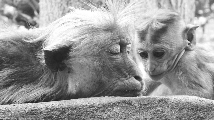 .. SriLanka Wildlife Blackandwhite First Eyeem Photo