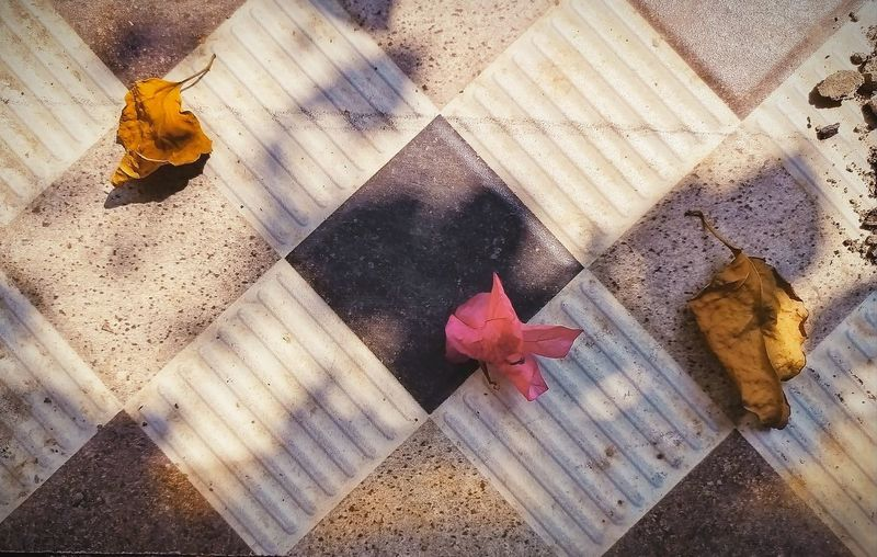 High angle view of rose on floor