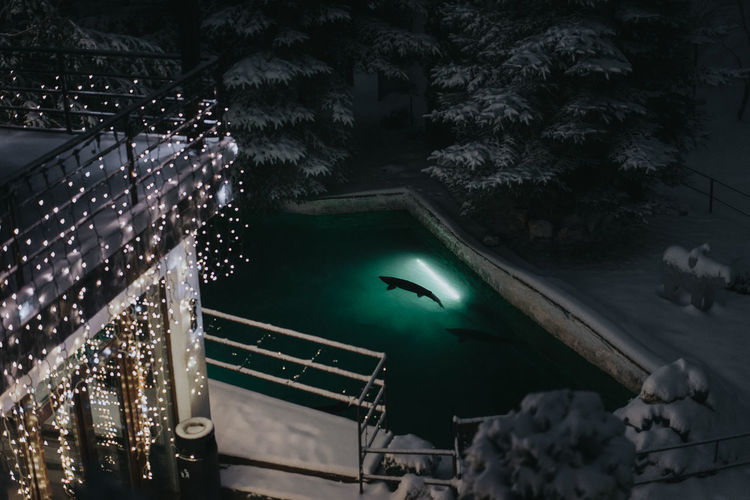 Night Fish Fish Pond Winter Snow Lights Fairy Lights Fairy Tale Water Tree High Angle View Frozen Cold Temperature