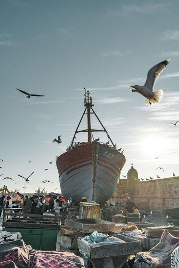 Seagulls flying in sky