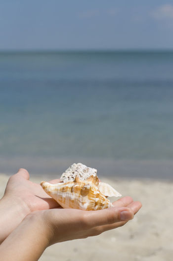 Cropped image of person holding shells at beach