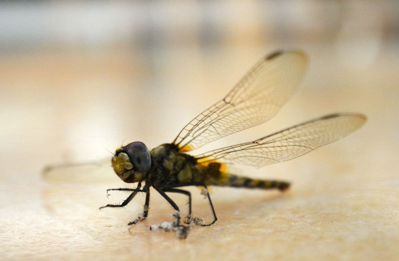 Close-Up Of Dragonfly On Surface