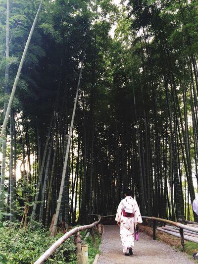 Kimono and bamboo at Kodai- Ji temple