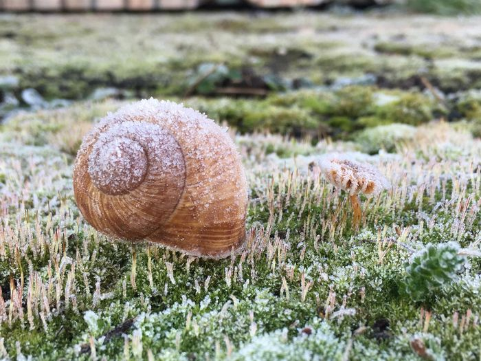 Surface level of snowed snail