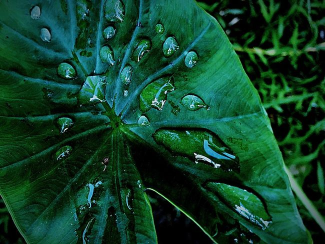 Leaf Green Color Nature Drop Growth Close-up Outdoors Beauty In Nature Plant No People Day Freshness Fragility Water Animal Themes Nature Photography Wallpaper Photography Green Leaf Green Nature EyeEmNewHere The Week On EyeEm Water Drops