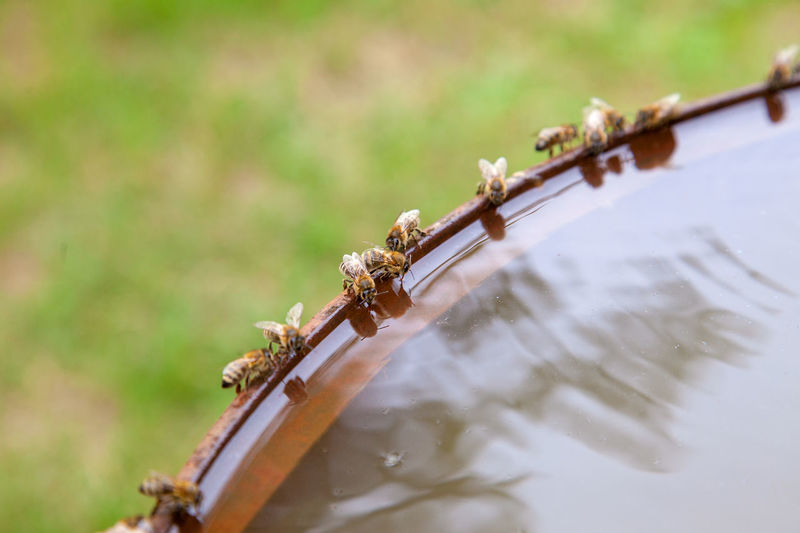 Close-up of insect on metal railing