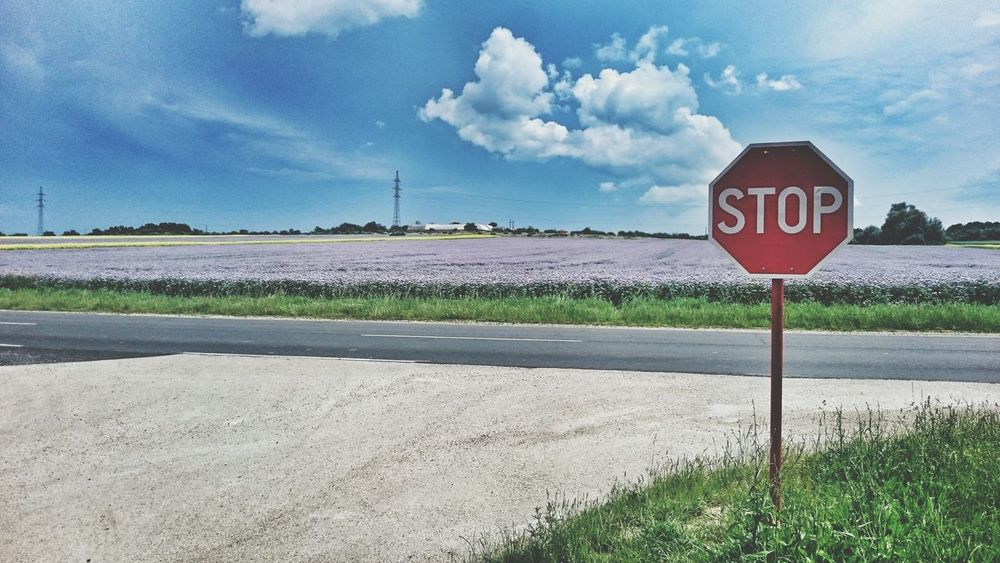 Lavender Lavender Colored Stop Grass The Great Outdoors - 2016 EyeEm Awards