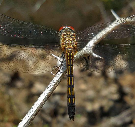 #Nature  #Dragonfly #outdoors #macro Close-up