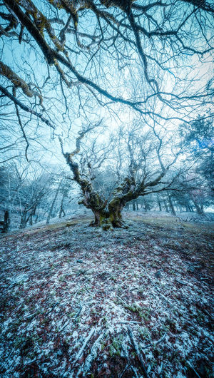 Dream Tree Winterurlaub  Bare Tree Beauty In Nature Branch Cold Temperature Day Environment Land Nature No People Non-urban Scene Outdoors Plant Scenics - Nature Sky Snow Snowing Tranquil Scene Tranquility Tree Tree In Woods Winter
